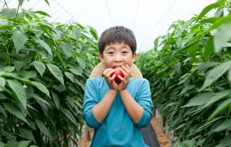 학교급식 친환경농산물 소비촉진 지원사업 신청안내